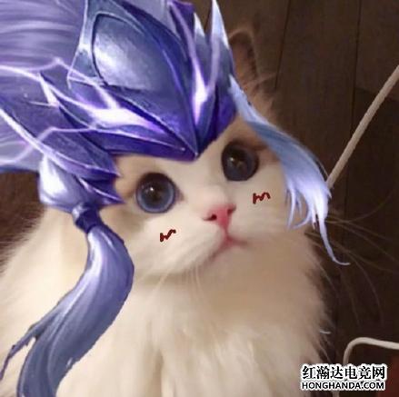 王者荣耀各英雄好看猫咪头像分享 马超