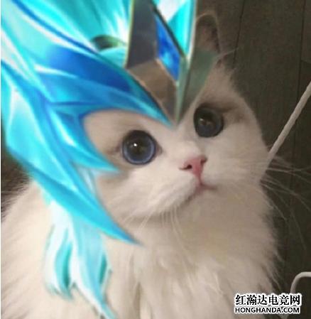 王者荣耀各英雄好看猫咪头像分享 铠
