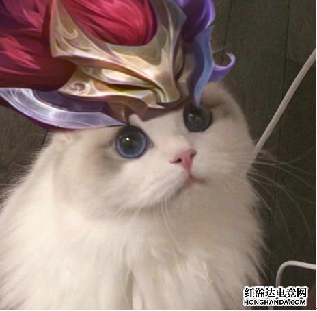 王者荣耀各英雄好看猫咪头像分享 百里玄策