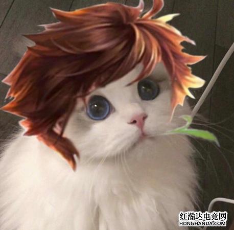 王者荣耀各英雄好看猫咪头像分享 李白