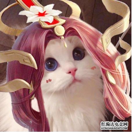 王者荣耀各英雄好看猫咪头像分享 韩信